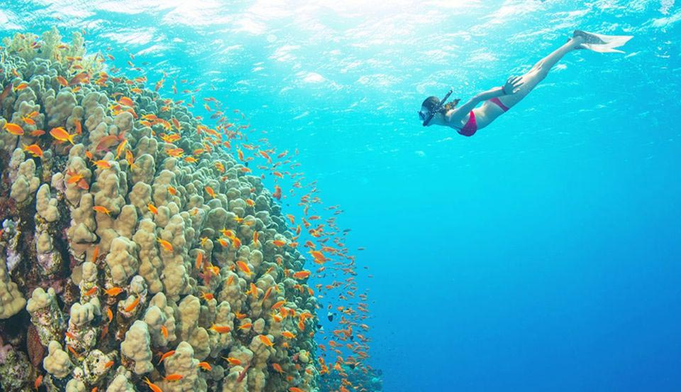 Mahmya Island Snorkeling Experience